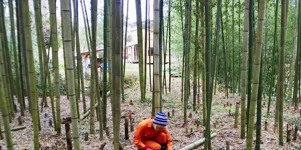 【終了】公開竹林整備Day 2020.12.6