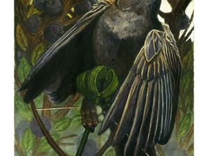 Sparrow (Who Killed Cock Robin?)