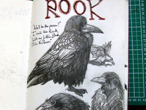 Cock Robin Sketchbook Catch-up