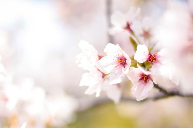 spring-2497200_640