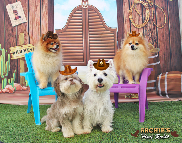 Archie, Cooper and Louis and Ollie (Arch