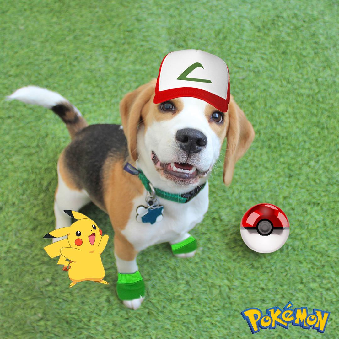 Pokemon Beagle (My First Day).jpg