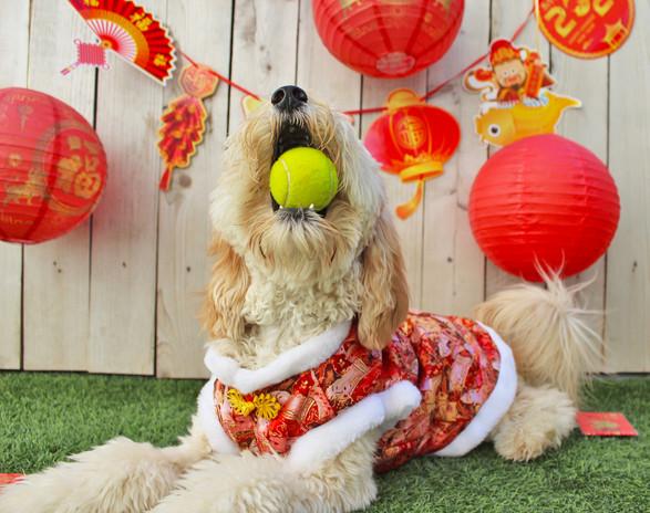 3 Hughie Lunar New Year 21.jpg