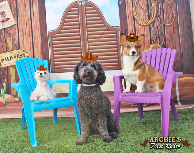 Chloe K, Cricket and Franchesca (Archie'