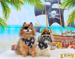 Agosto and Nico (Agosto's Pirate Party).jpg
