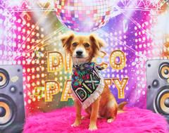 Dixie (Dixie's Disco Party).jpg