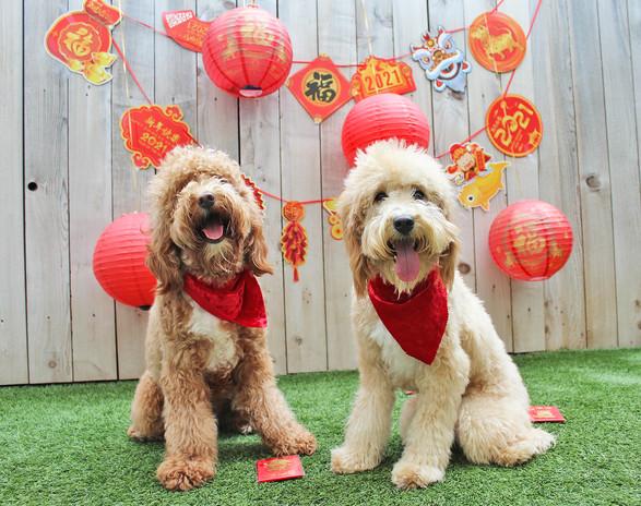 1 Arthur and Nelson Lunar New Year 21.jp