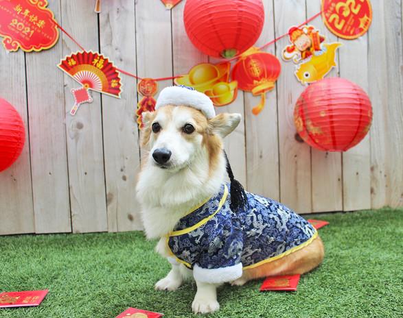 3 Chilly Lunar New Year 21.jpg