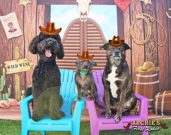 Bucky, Ozzy and Jaxson (Archie's Firtst