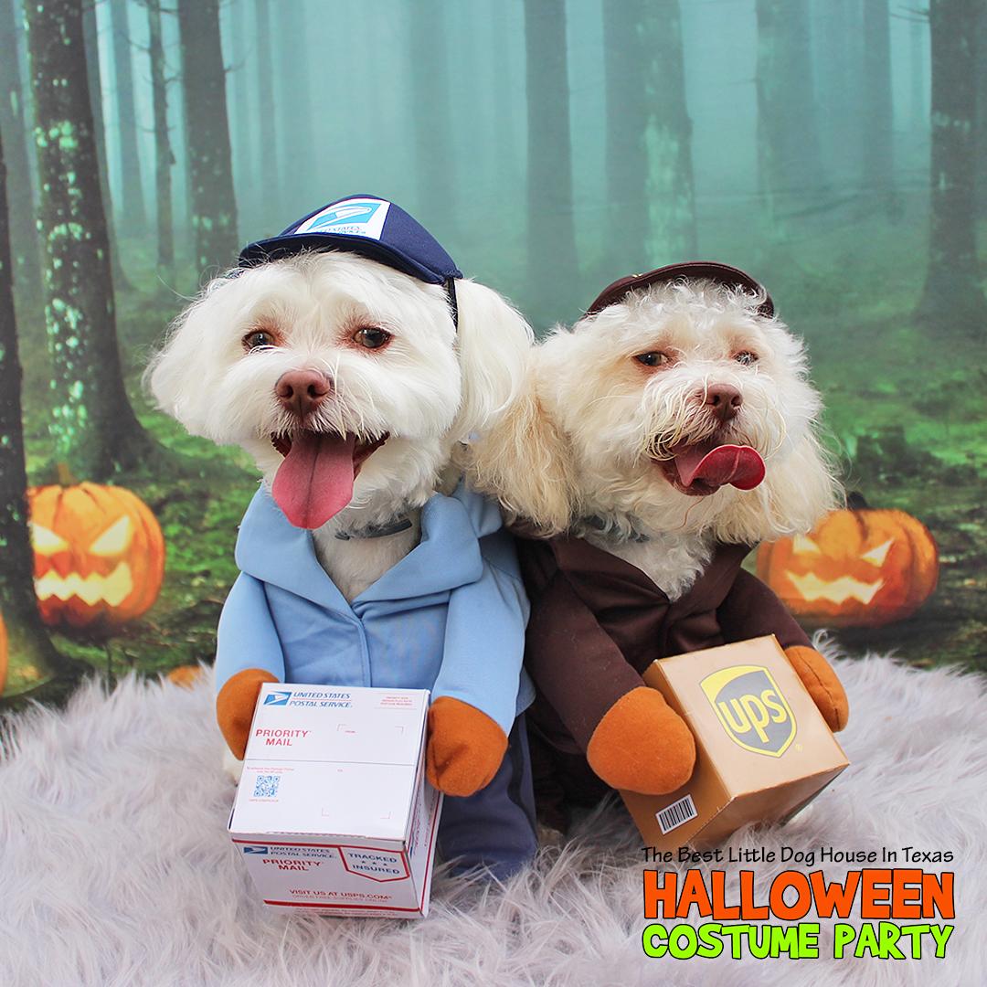 Bentley and Cooper (Halloween 2020).png