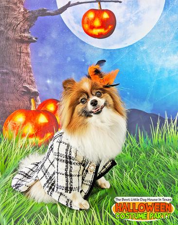 Harlow_Halloween2019.png