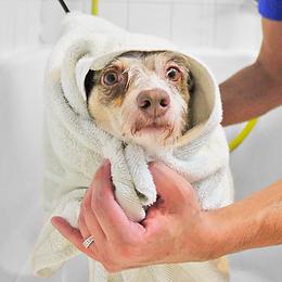 (1) Wash & Go Bath