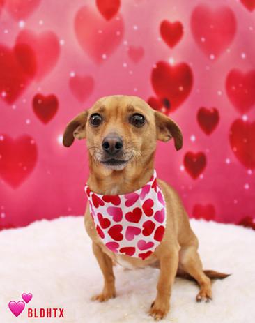 Chester Valentine's Photo.jpg