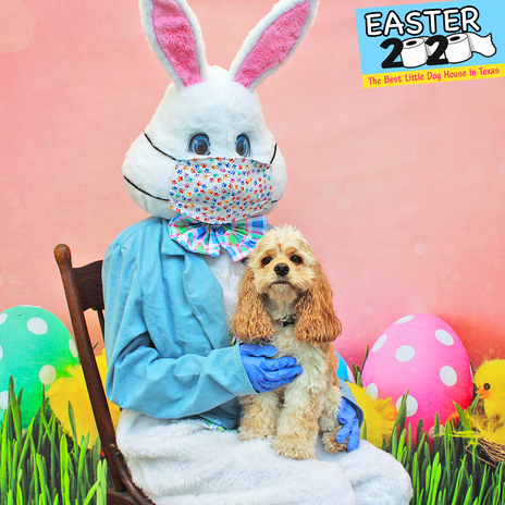 Pippa H (Easter 2020).png