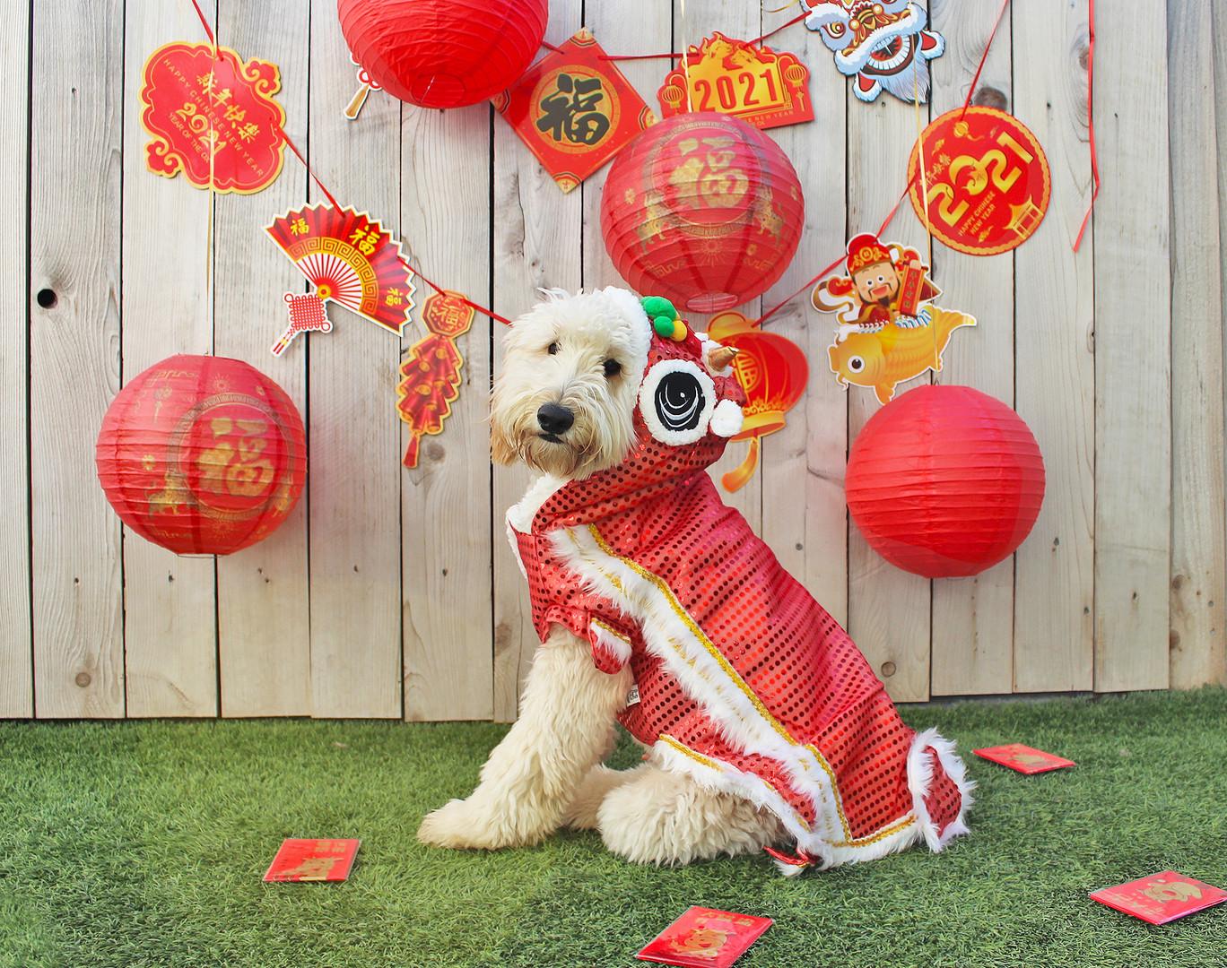 5 Hughie Lunar New Year 21.jpg