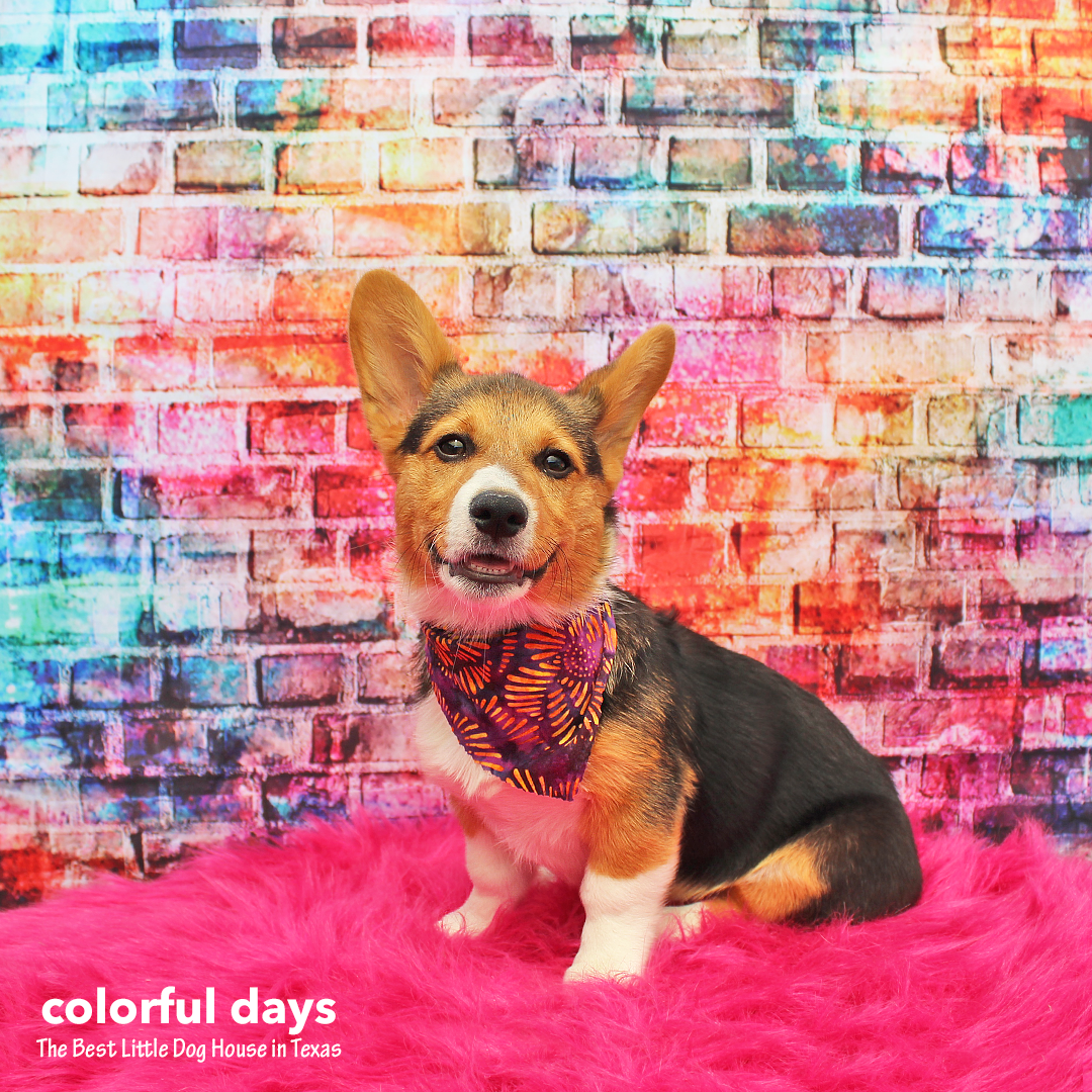 Millie Anderson (Colorful Days at BLDHTX