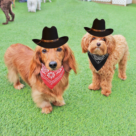Bucky_Teddy_RodeoReady.png