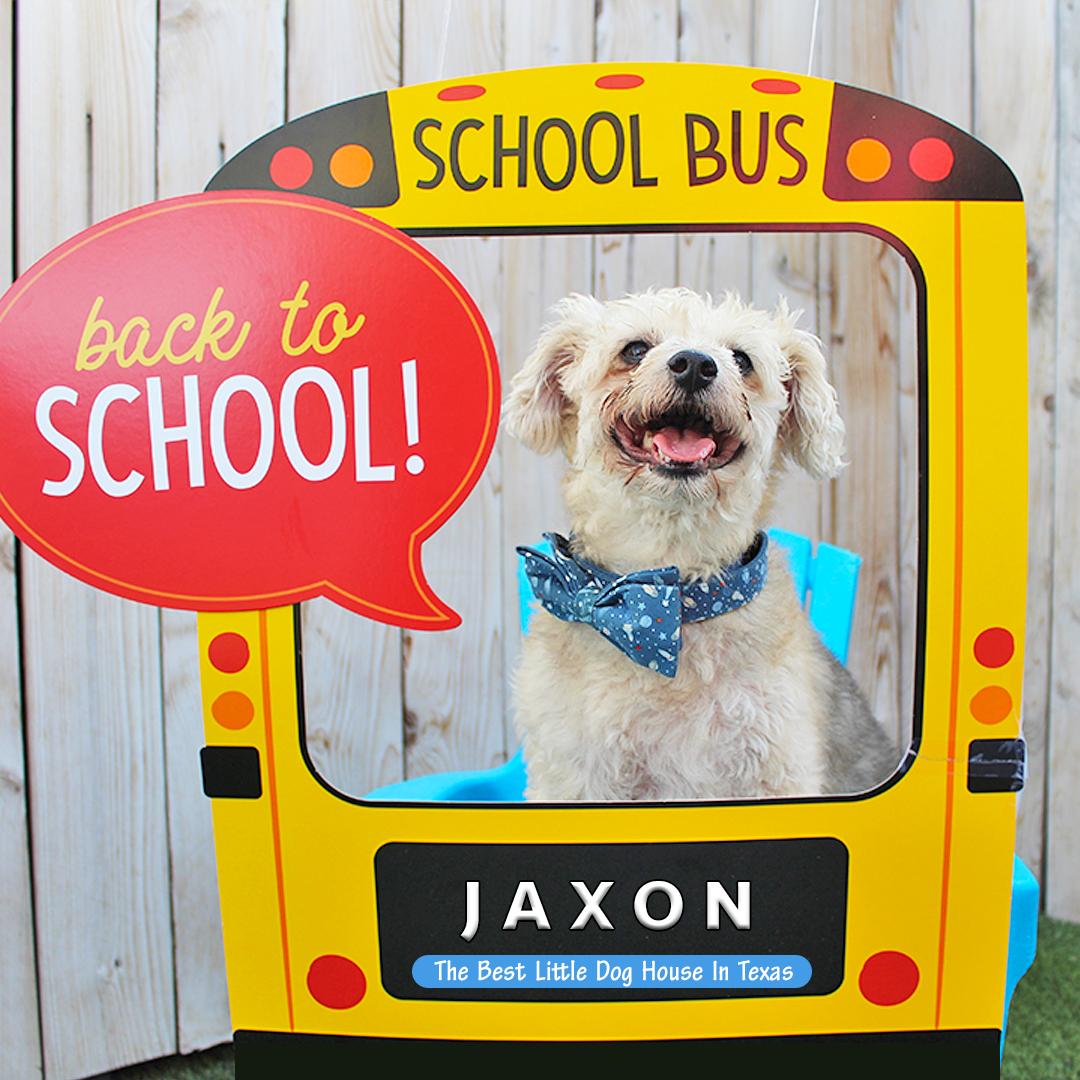 Jaxon Linga Back To School.png