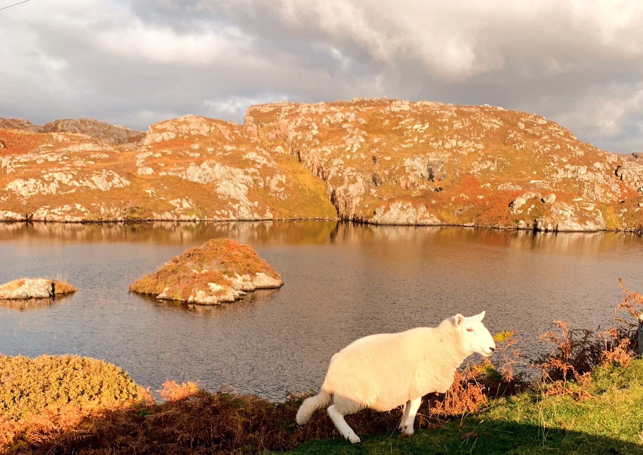 Rush Hour in Clachtoll
