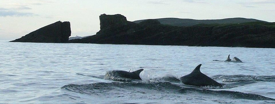 dolphins at split rock Clachtoll