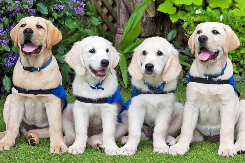 Cute puppy photo_AA.jpg