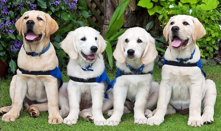 Cute puppy photo_AA_Web.jpg