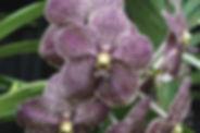 Beau Monde Orchids.jpg