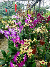 Soroa Orchids, Inc.jpg