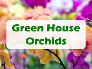 atpf-2021-partner-gold-green house orchids.jpg