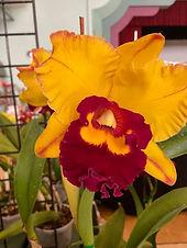 Macs Orchids.jpg