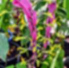 JG's Tropical Plants.jpg