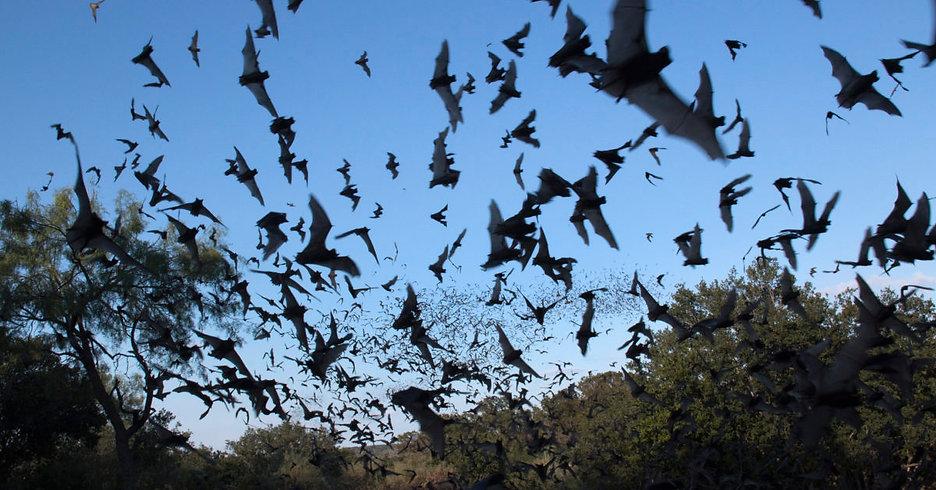 Bats-flying-1200x628.jpg