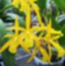 O.F. Orchids.jpg