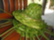 Everything Coconut.jpg