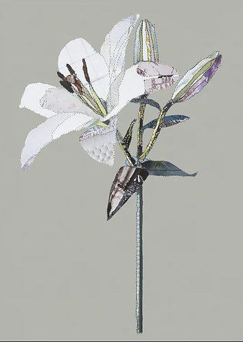 Catherine Kleeli - Lily