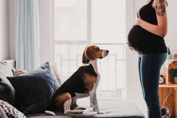 zwanger en hond.jpg