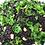 Thumbnail: WILD RICE & KALE (per kg)