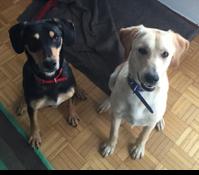 Zwei auf einen Streich: Schnüffelnase-Lucy und Schlawiner-Miguel