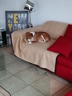 Pablo (Poli)