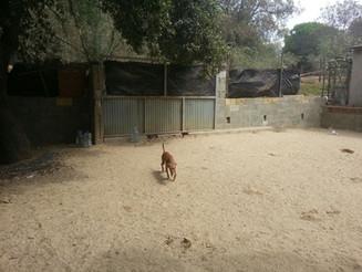 neues Gelände für das Tierheim gesucht!