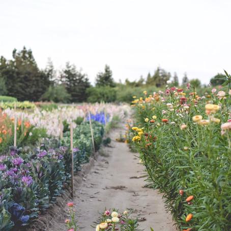 What is a Fresh Cut Flower Farm?