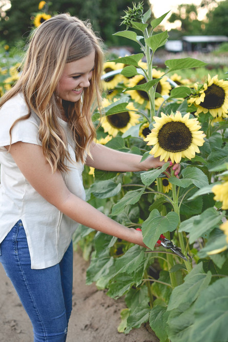 Alyssa cutting Sunflowers