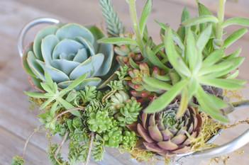 Succulent Arrangment
