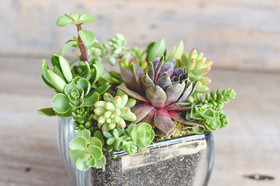 Potted Succulent Display