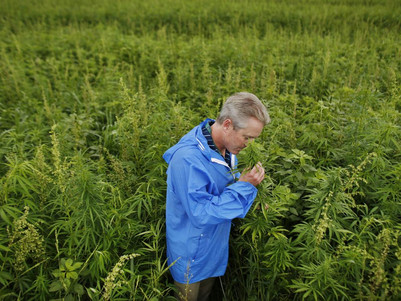 Hemp the Super Plant: How its Benefits are Becoming Rediscovered.