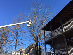 Tree removal adjacent to house