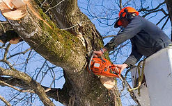 tree removal, tree pruning, chainsaw