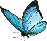 Blue Butterfly 1.png