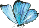 Blue Butterfly 7.png