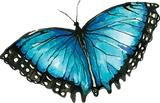 Blue Butterfly 5.png